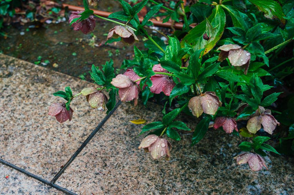 Humid Summer Rain